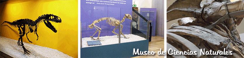 Museo Ciencias naturales Valencia