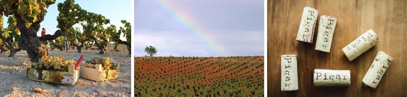 wijn regio Utiel