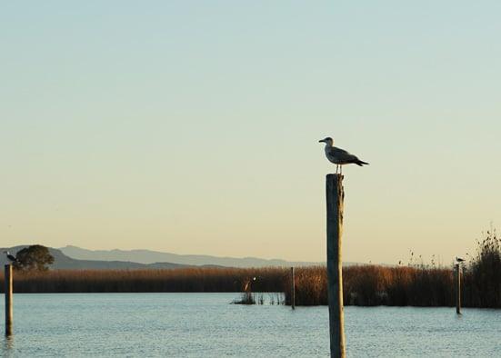 Albufera Vogels